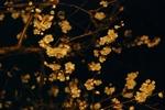 春一番〜20080223(1)