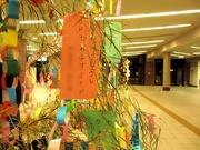 七夕〜20120707