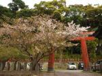 葉桜〜20100411全景