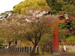 マイ桜〜20100412全景