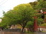 マイ桜〜20100427全景
