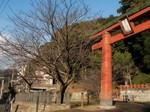 マイ桜〜20110214壱