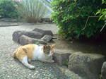 三毛猫〜20110501