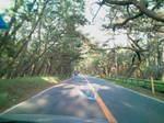虹の松原〜20110519