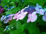 水無月の花〜20110621