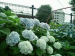夏至〜20110622壱