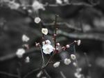 寒梅の季節〜20120220
