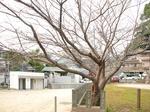 さくらプロジェクト2012始動〜20120224参