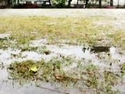 穀雨〜20130420