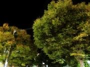 夜景〜20131022