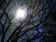 陽の眼〜20131208