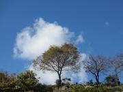空〜20131212
