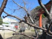 冬至〜20131222