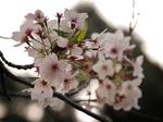 花祭〜20140408壱
