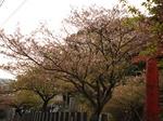 花祭〜20140408弐