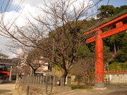 第2回つぼみ調査〜20140309