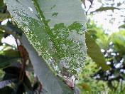 雨〜20060516