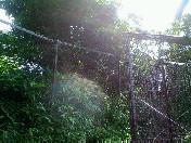 夏日〜20060619
