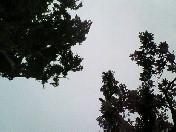 夏至〜20060621