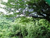 雨曇り〜20060622