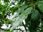 雨〜20060926