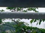 雨〜20070425