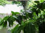 雨〜20070525