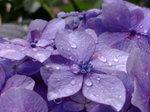 雨〜20070622