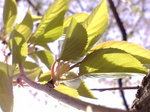 葉桜〜20080415-2