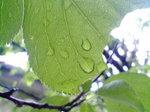 雨〜20080524