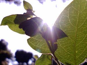 初夏の光〜20080526