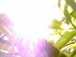 初夏の光〜20080527