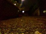 夜〜20080620