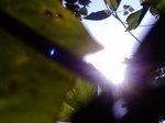 夏色の光〜20080717
