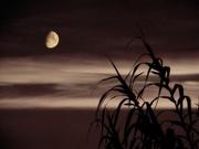 moony〜20110907壱