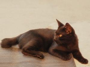 猫〜20110913弐