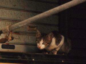 猫〜20110913参
