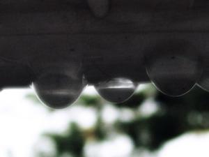 雨の日〜20060917(1)