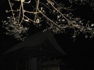 夜桜〜20070327(1)