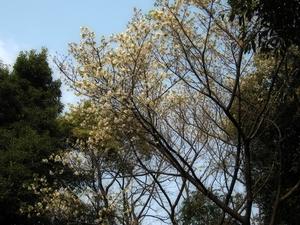 桜〜20070328(12)