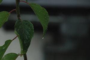 雨〜20070829(1)