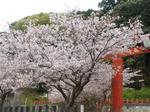 マイ桜〜20100404全景