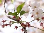 桜プロジェクト〜20100407定点