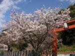 桜プロジェクト〜20100407全景
