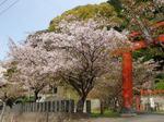 花祭〜20100408全景