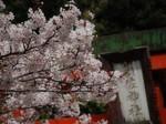 花祭〜20100408接写