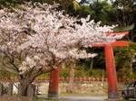 マイ桜〜20100409全景