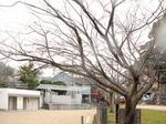 さくらプロジェクト〜20120316弐