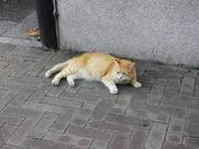 猫〜20130717