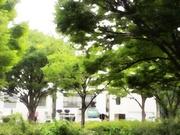 夕景〜20130721
